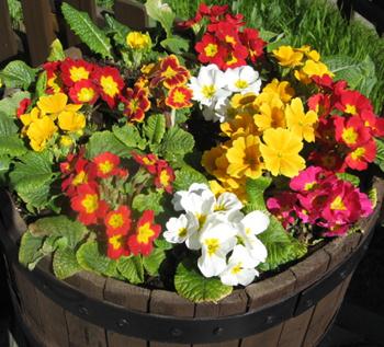 контейнер вазон цветы