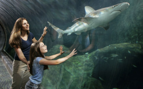 акула в аквариуме. akula.