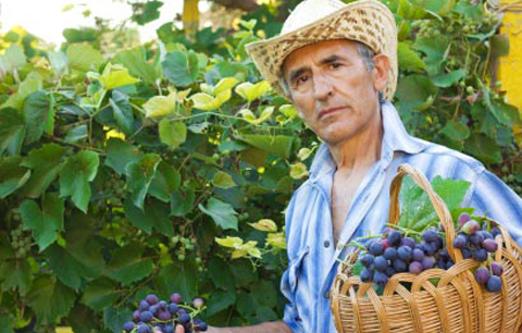 итальянский фермер