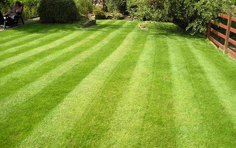 газон